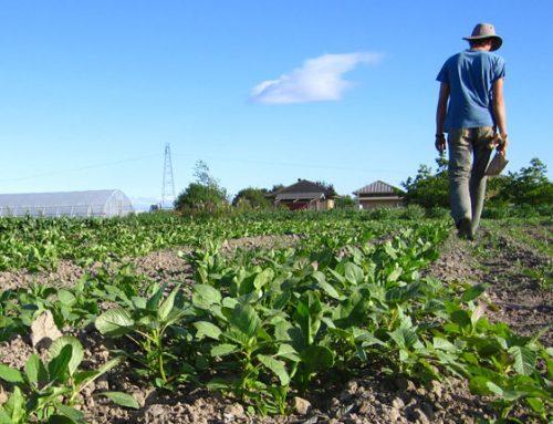 Τι αλλάζει στo Πρόγραμμα Αγροτικής Ανάπτυξης – Ποιοι παίρνουν προτεραιότητα στα βιολογικά