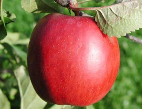 Με έμφαση στο βιολογικό μήλο η διεθνής έκθεση Interpoma