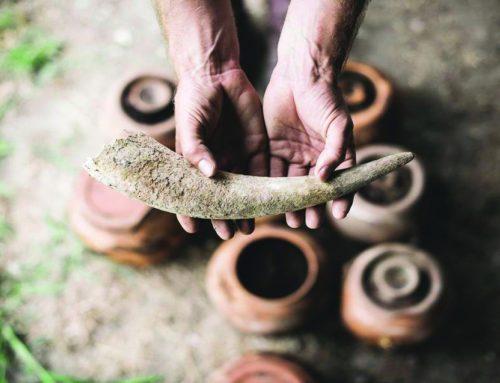 Οι σπόροι της αειφορίας: Η Βιοδυναμική προσέγγιση